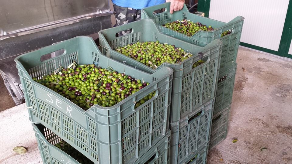 casse-olive