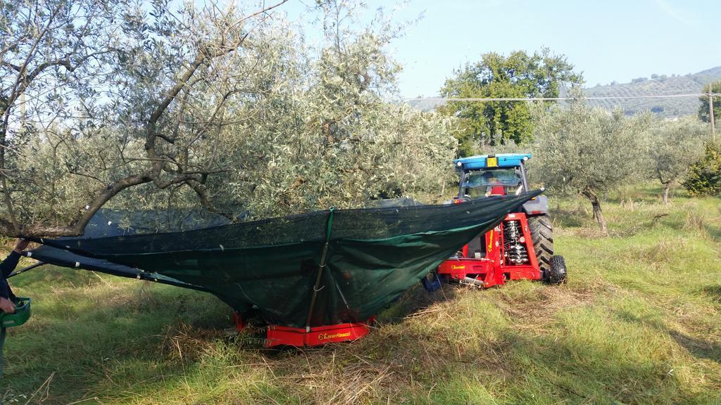 macchina-olive