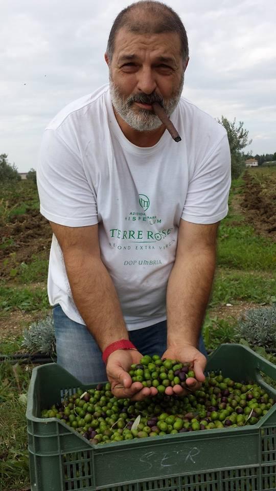 mario-olive