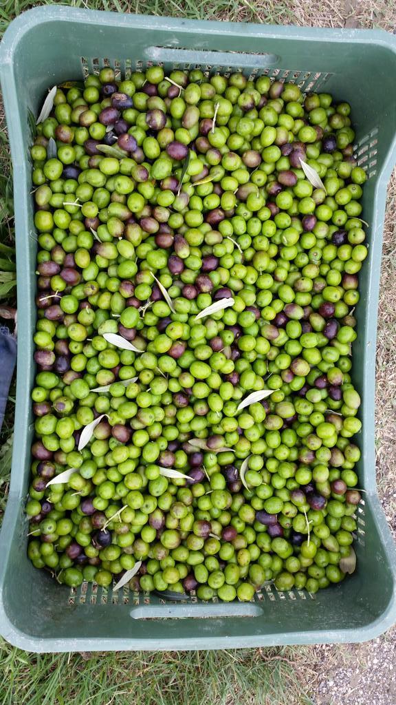 olive-frangitura2