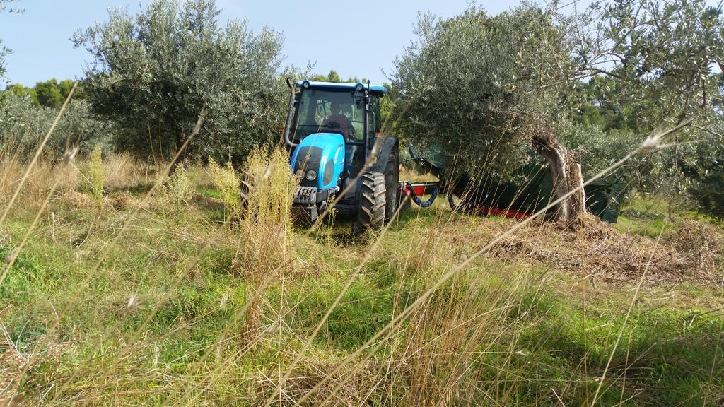 olive-macchina