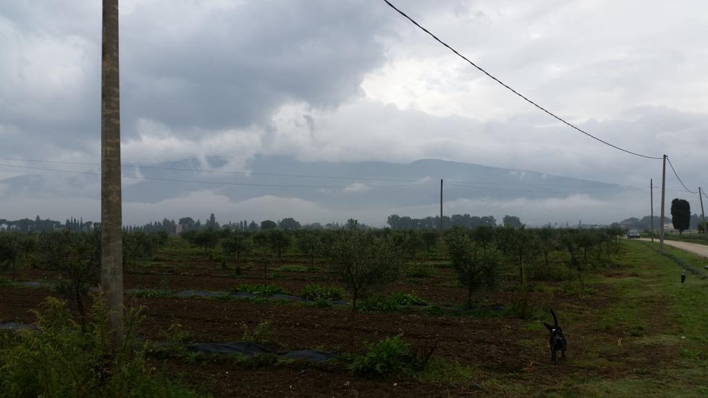 pioggia_spello