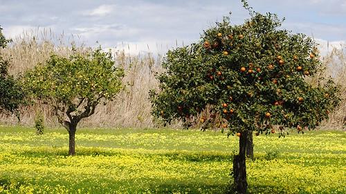 Le arance: non solo Vitamina C!